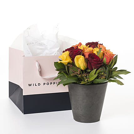 Bucket Of Mixed Colour Roses:Flower Delivery New Zealand