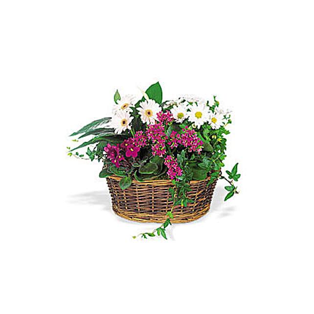 Send a Smile Flower Basket:Plants  in Oman