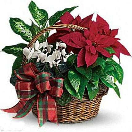 Christmas Special Decorated Plant