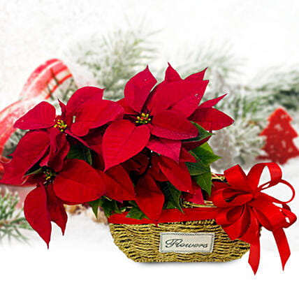 Festive Poinsettia Plants Basket:National Day Gifts
