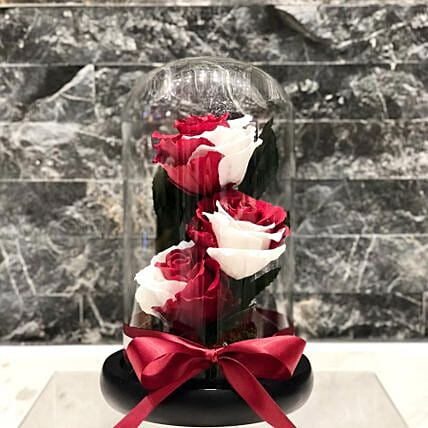 Qatar Roses In Glass Dome Vase