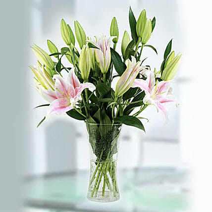 stangazer pink lilies online:Lilies  Delivery in Qatar