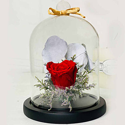 Beautiful Red Forever Rose In Glass Dome