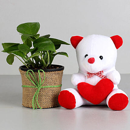 Money Plant in Black Pot with Teddy Bear