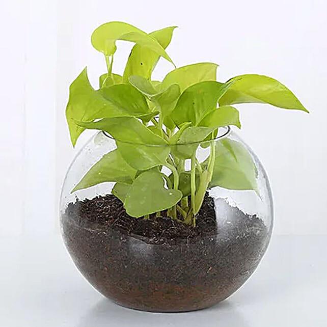 Money Plant Round Vase