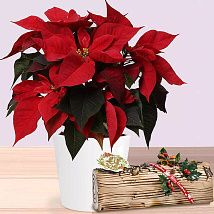 Poinsettia Plant In Wooden Vase with Chocolate log cake