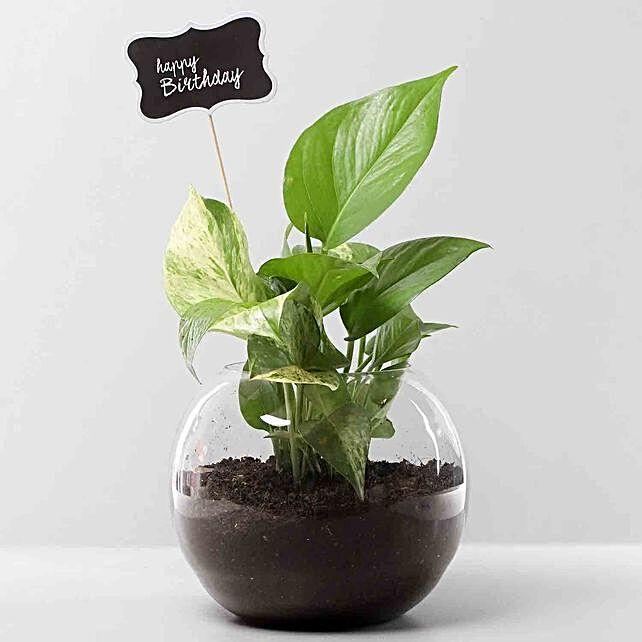 Bday Money Plant Combo
