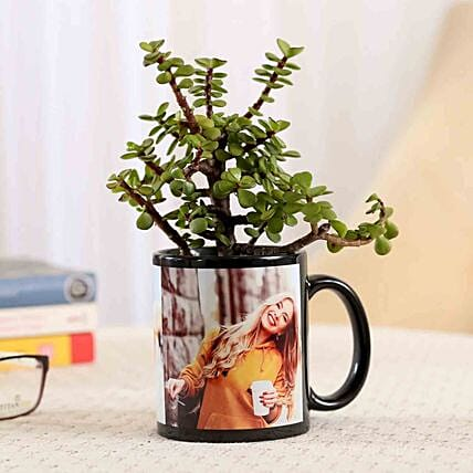 Jade Plant In Personalised Black Mug Combo