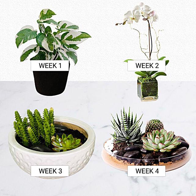 Verdure Month