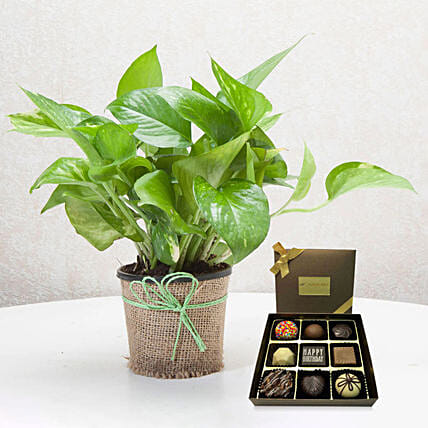 Green Money Plant with Happy Birthday Chocolate:Birthday Gift Delivery in Singapore
