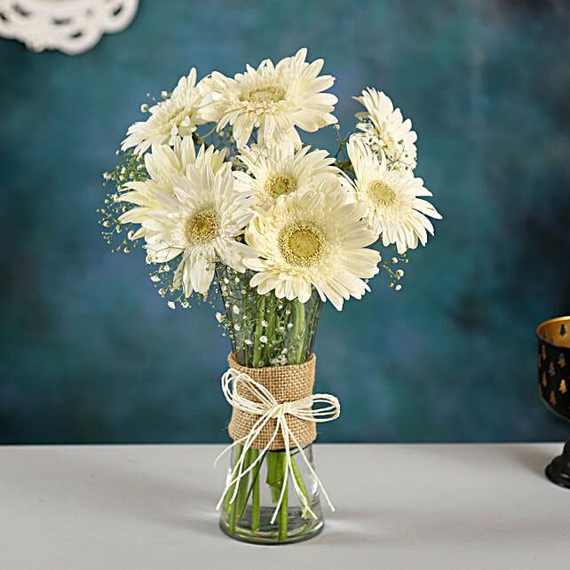 8 Serene White Gerbera Vase