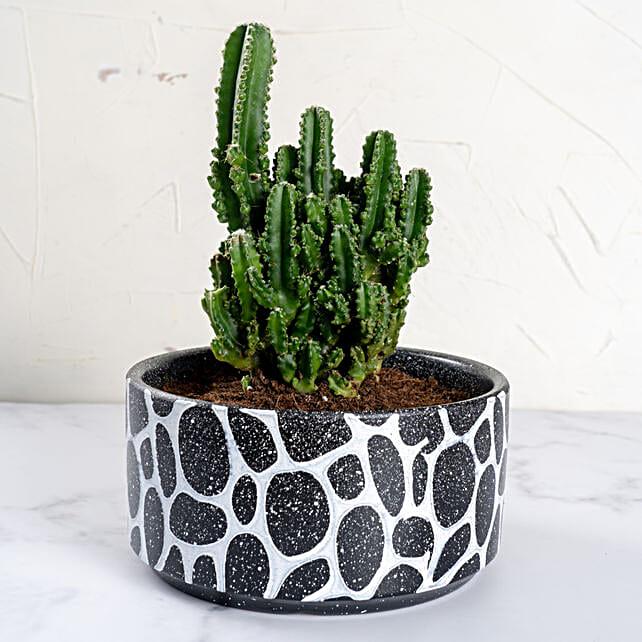 Cactus in Designer Vase
