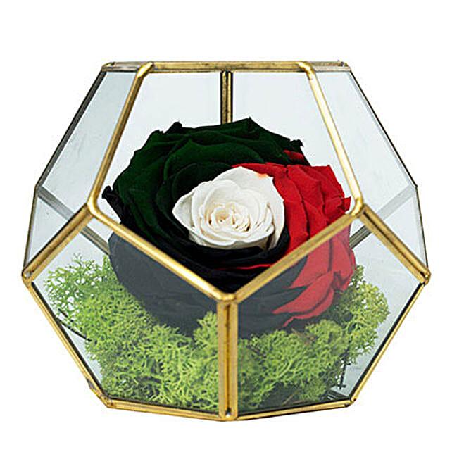 Marvellous Uae Flag Colored Rose