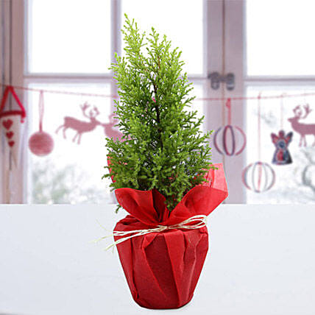 Red Christmas Tree In Uae Gift Red Christmas Tree Ferns N Petals
