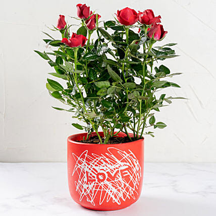 Red Rose Plant In Love Pot
