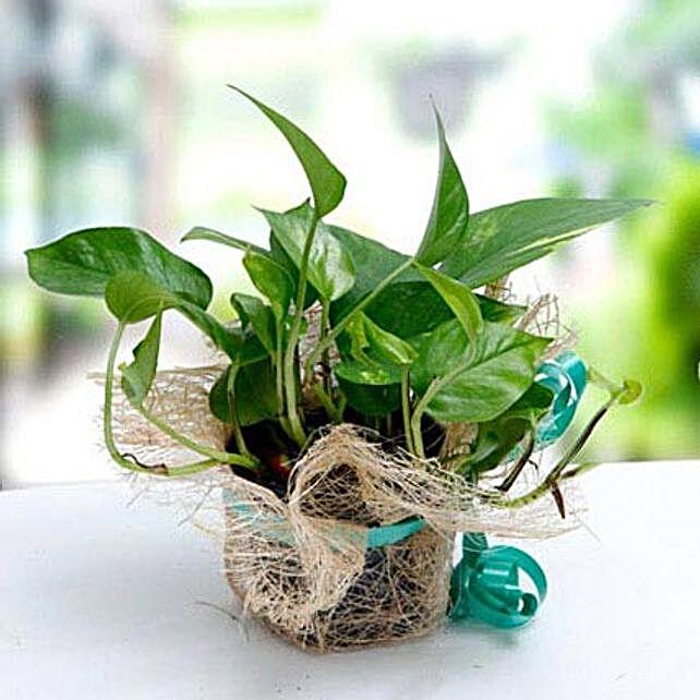 Thoughts Of U:Indoor Plants in UAE