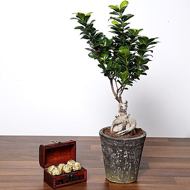 Ficus Bonsai Plant In Ceramic Pot and Chocolates:Outdoor Plants to UAE