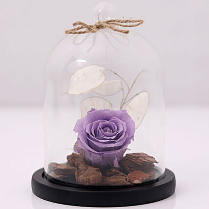 Purple Forever Rose In Glass Dome In Uae Gift Purple Forever Rose In Glass Dome Ferns N Petals,Joanna Gaines Shiplap Bedroom