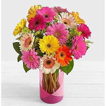 12 Mixed Gerbera