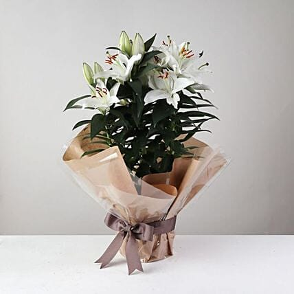 White Surprise Lilies