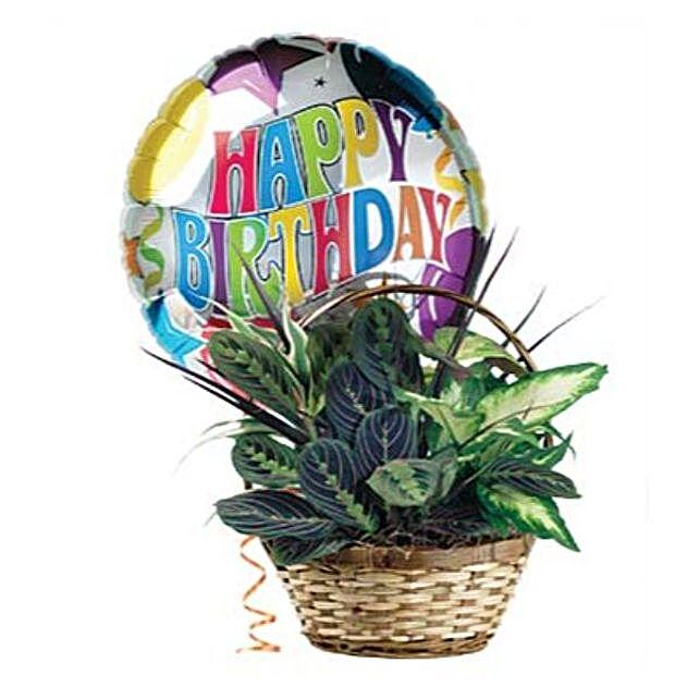 Birthday Greetings Dish Garden