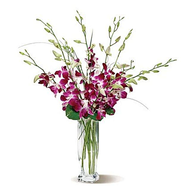Dendrobium Orchids flowers birthday
