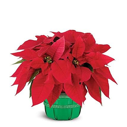 Floral Poinsettia Christmas Basket:Plants  in USA