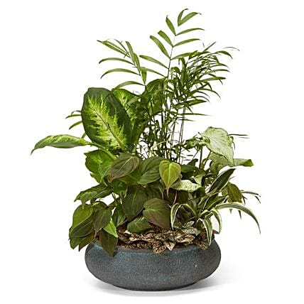 Green Serenity Dish Garden:Plant Delivery in USA