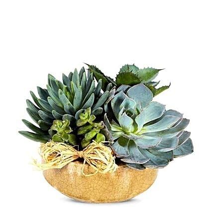 Succulent Dish Garden:Gifts to USA