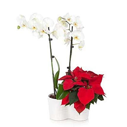 Orchid N Poinsettia Plants For Christmas
