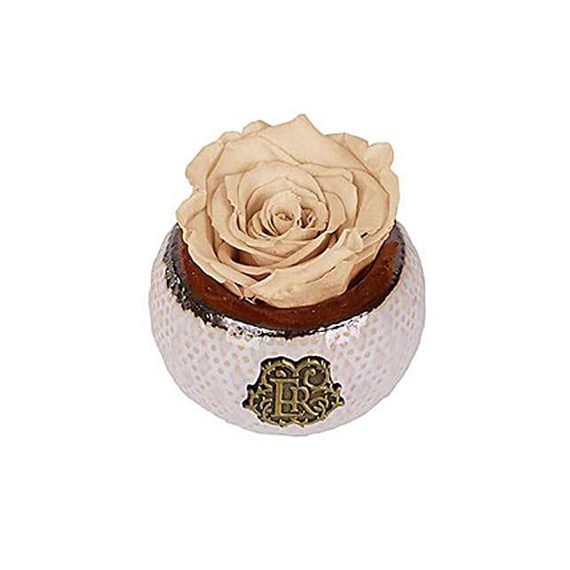 Mini Soho Eternal Luxury Rose